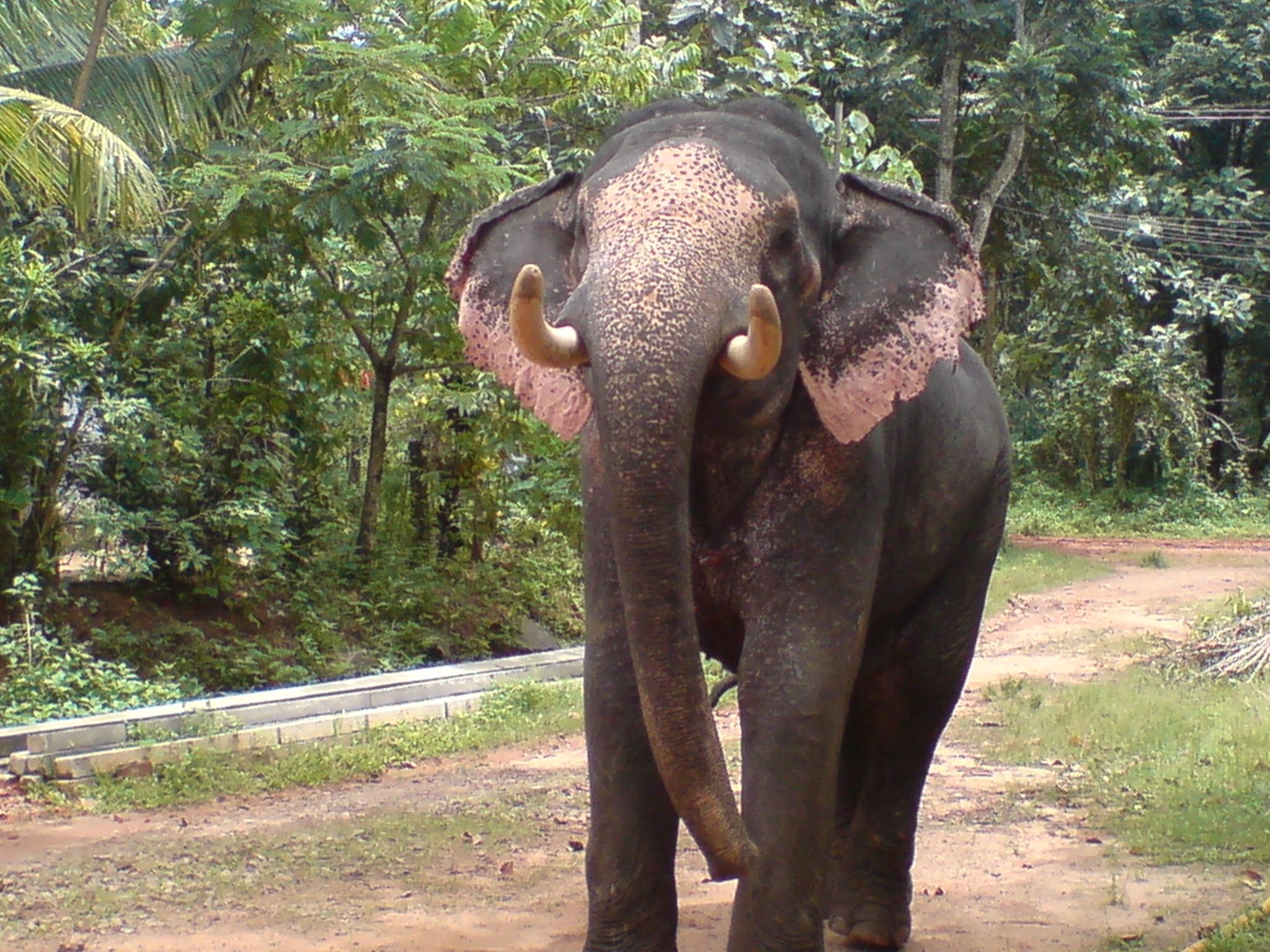 Kerala Elephant Wallpaper Hd